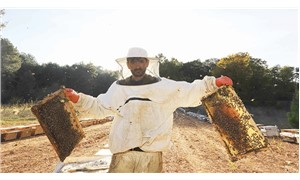 Yasak ilaç 200 bin kovan arıyı yok etti