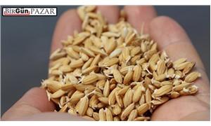 Çokuluslu şirketler yerel tohumları bitirmeye çalışıyor