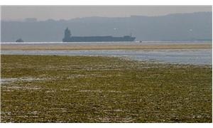 İzmir Körfezi'ni deniz marulları bastı