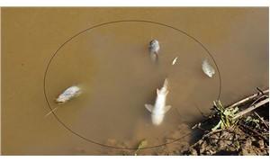 Gediz Nehri'ndeki toplu balık ölümleri Meclis gündeminde