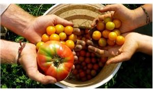 Buğday Derneği'nden organik tarıma giriş eğitimi