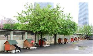 Kadıköy Belediyesi, 'Sahipsiz Hayvanlar Rehabilitasyon ve Eğitim Merkezi'nin temelini atıyor