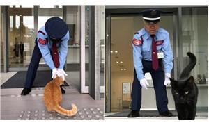 2 kedi, 2 yıldır müzeye girmeye çalışıyor