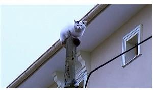 Kargadan kaçan kedi direkte mahsur kaldı
