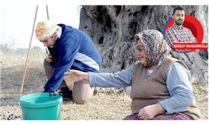 Bin 800 yaşındaki zeytin ağacının yağı öğrencilere umut olacak