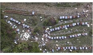 Kastamonu'da ayılar arı kovanlarını parçaladı