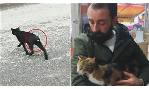 Sultangazi'de kedilerin kuyrukları kesiliyor