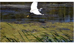 Kızılırmak Deltası Kuş Cenneti'ne girişler ücretli olacak
