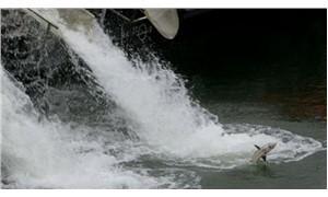 Çin'de, nesli tükenmekte olan 6 bin balığın ölümüne neden olan köprü inşaatı durduruldu