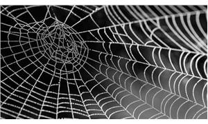 Örümcek ağının çelikten sağlam olmasının nedeni araştırıldı