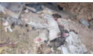 Uşak'ta işkence edilerek öldürülen 5 köpek yavrusu bulundu