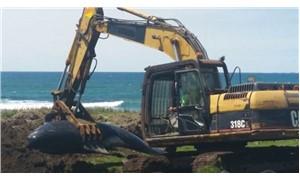 Yeni Zelanda'da toplu balina ölümleri devam ediyor: 51 balina daha kıyıya vurdu
