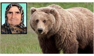 Bolu'da yaşlı kadını öldüren ayı için 'vur emri' çıkarıldı