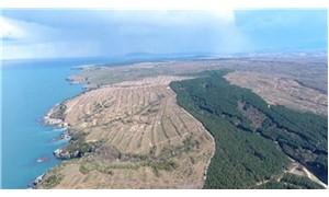 Japonya, 650 bin ağacın kesildiği Sinop nükleer santralinden vazgeçiyor