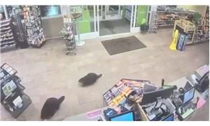 Kunduzlar elektronik mağazısını gezdi