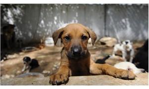 Hayvan hakları ihlalinden 257 kişiye para cezası