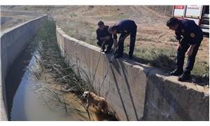 Adıyaman'da kanala düşen köpek kurtarıldı