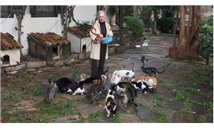 Müze gelirleriyle köyün kedilerine bakıyor