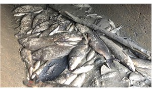 Yüzlerce balığın ölümüne neden olan şirkete para cezası