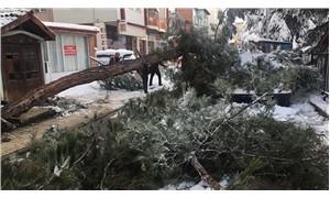 Kar yağışına dayanamayan ağaç caddeye devrildi