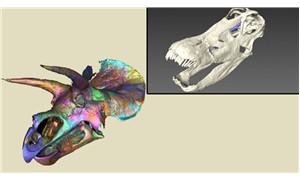 Dijital müze, herkesin milyonlarca fosile ulaşmasını sağlayacak