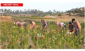 Çiftçiler şirketlerin insafına terk edilemez