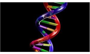 Genler kesilip değiştirilmeden obezite engellenebilir