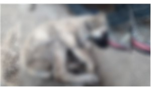 Sokak köpeği donarak yaşamını yitirdi