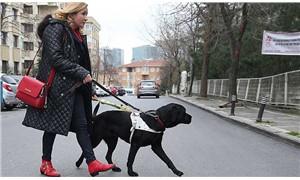 Görme engellilerin hayat ışığı: Rehber köpekler