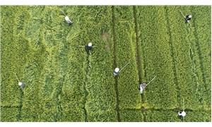 Türkiye'nin kurtuluşu tarım, tarımın da kurtuluşu kooperatif