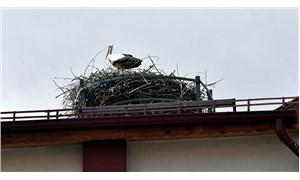 35 yıldır çatıda misafir olan leylekler için pilav günü