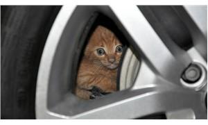 Otomobilin motoruna giren kedi 5 saatlik çalışmayla kurtarıldı