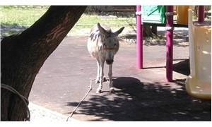 Çocuk parkına terk edilen eşek bakıma alındı