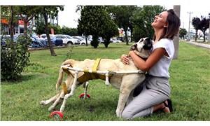 Esnafın yürüteç yaptığı felçli köpek Boz, yaşamını yitirdi