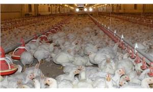 Beyaz et ve yumurta üretimi düştü