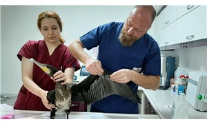 Yaralı karabatak tedavi edildi