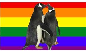 Eşcinsel penguenler terkedilmiş yumurtayı evlat edindi