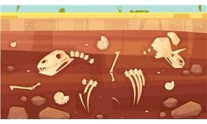 Uzak geçmişin izinde: Paleontoloji