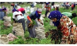 Mevsimlik işçilerin sorunları masada kaldı