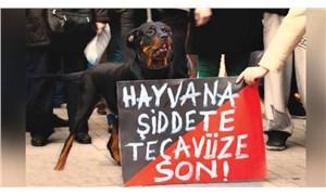 Zonguldak'ta köpeğe işkence