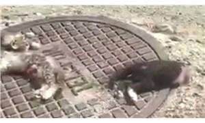 Antalya'da 3 kedinin vahşice parçalanmış halde cansız bedenleri bulundu