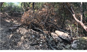 Araziye yol açmak için sit alanındaki ağaçlar kesildi