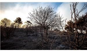 İzmir'deki yangında 5 bin hektar orman yandı