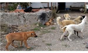Lüleburgaz'da 300'e yakın köpek kayboldu