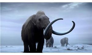 Kayseri'de mamut fosili bulundu