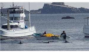 Japonya'da tepki çeken 'gelenek': Binlerce yunus öldürülecek ya da yakalanacak
