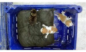 Tatil sezonu biterken, 3 yavru kediden Kaş'a küçük bir kaçamak