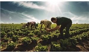 Tarımda 12 Eylül'ün ekonomi politiği