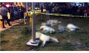 AKP'li Belediye Meclisi Üyesi: Köpek öldürmek bizim işimiz