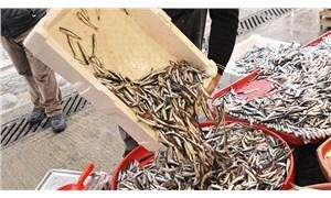 Balıkta son 20 yılın en kötü sezonu: Kasım- aralık ayında balıkçılık bitebilir